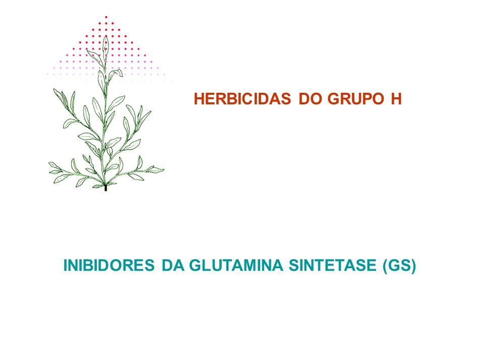 HERBICIDAS DO GRUPO H INIBIDORES DA GLUTAMINA SINTETASE (GS)