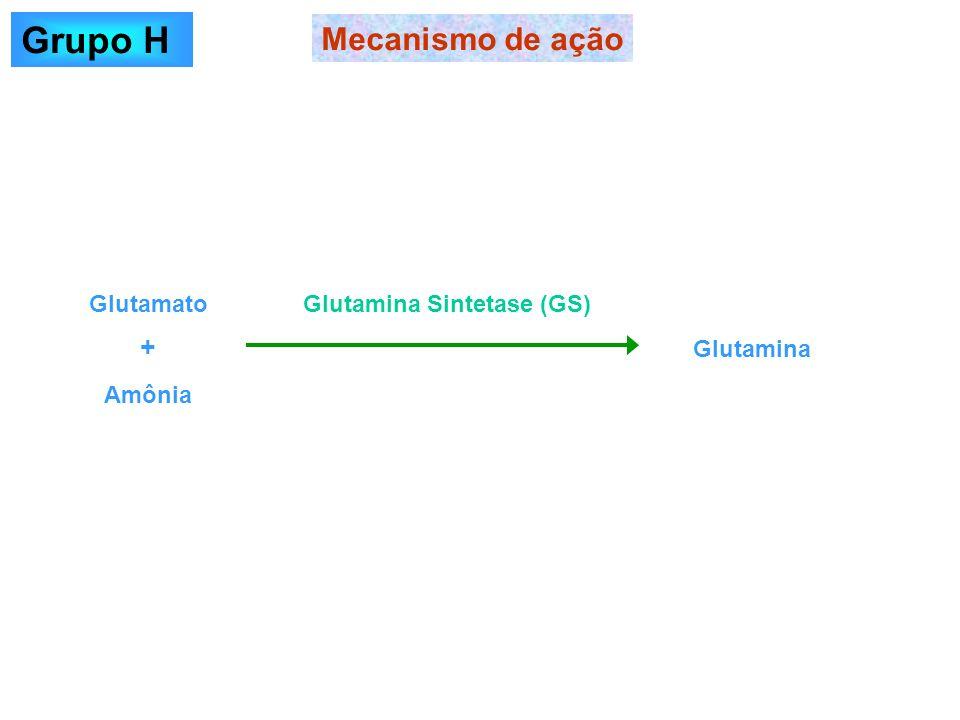 Mecanismo de ação Grupo H Glutamato Amônia Glutamina Glutamina Sintetase (GS) +