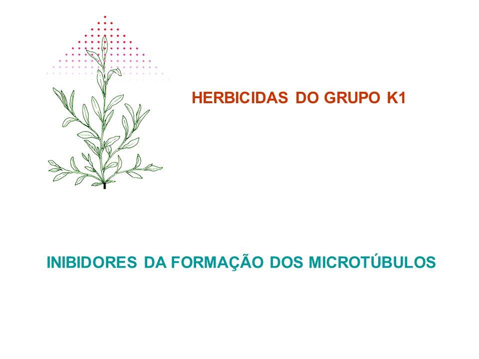 HERBICIDAS DO GRUPO K1 INIBIDORES DA FORMAÇÃO DOS MICROTÚBULOS