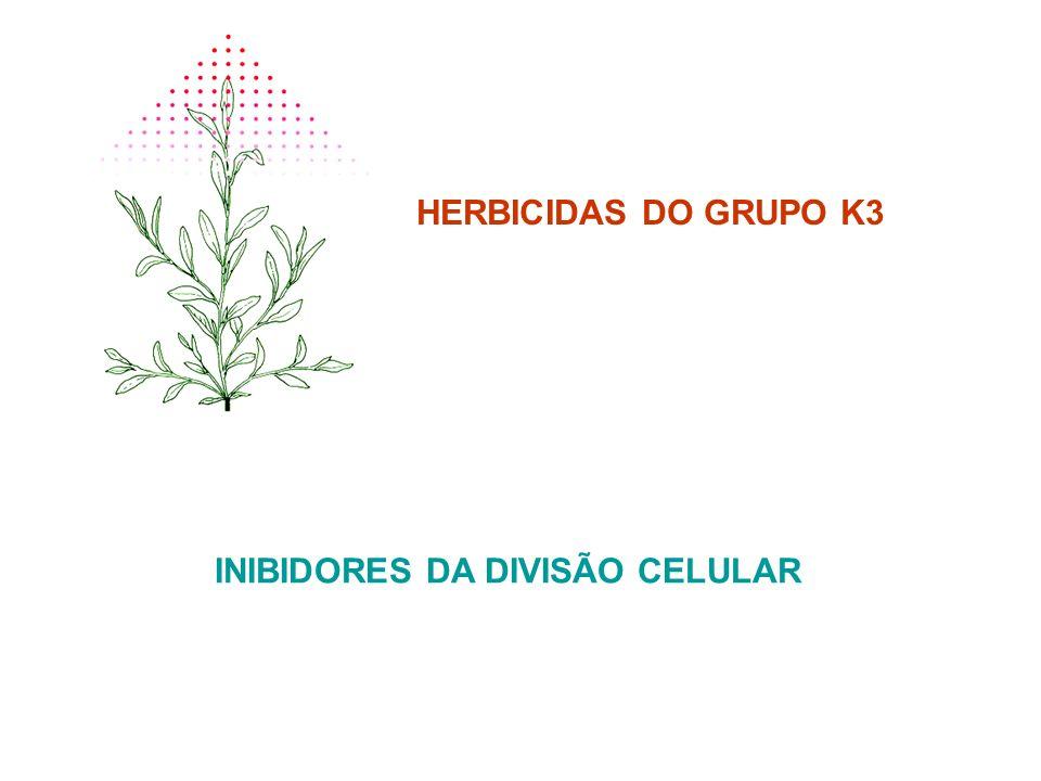 HERBICIDAS DO GRUPO K3 INIBIDORES DA DIVISÃO CELULAR