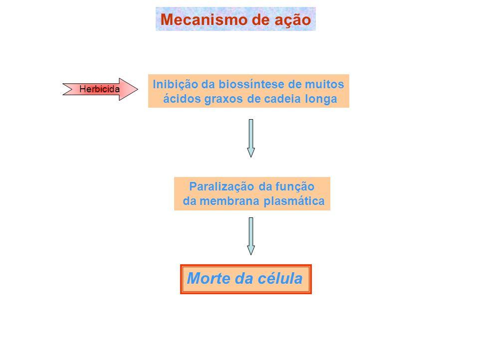 Mecanismo de ação Herbicida Inibição da biossíntese de muitos ácidos graxos de cadeia longa Paralização da função da membrana plasmática Morte da célu