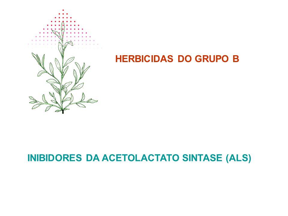 HERBICIDAS DO GRUPO B INIBIDORES DA ACETOLACTATO SINTASE (ALS)
