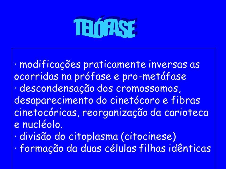 · modificações praticamente inversas as ocorridas na prófase e pro-metáfase · descondensação dos cromossomos, desaparecimento do cinetócoro e fibras c