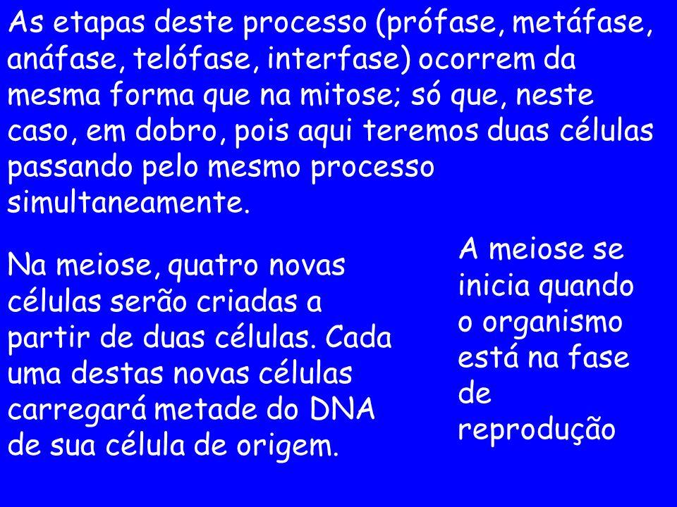 As etapas deste processo (prófase, metáfase, anáfase, telófase, interfase) ocorrem da mesma forma que na mitose; só que, neste caso, em dobro, pois aq