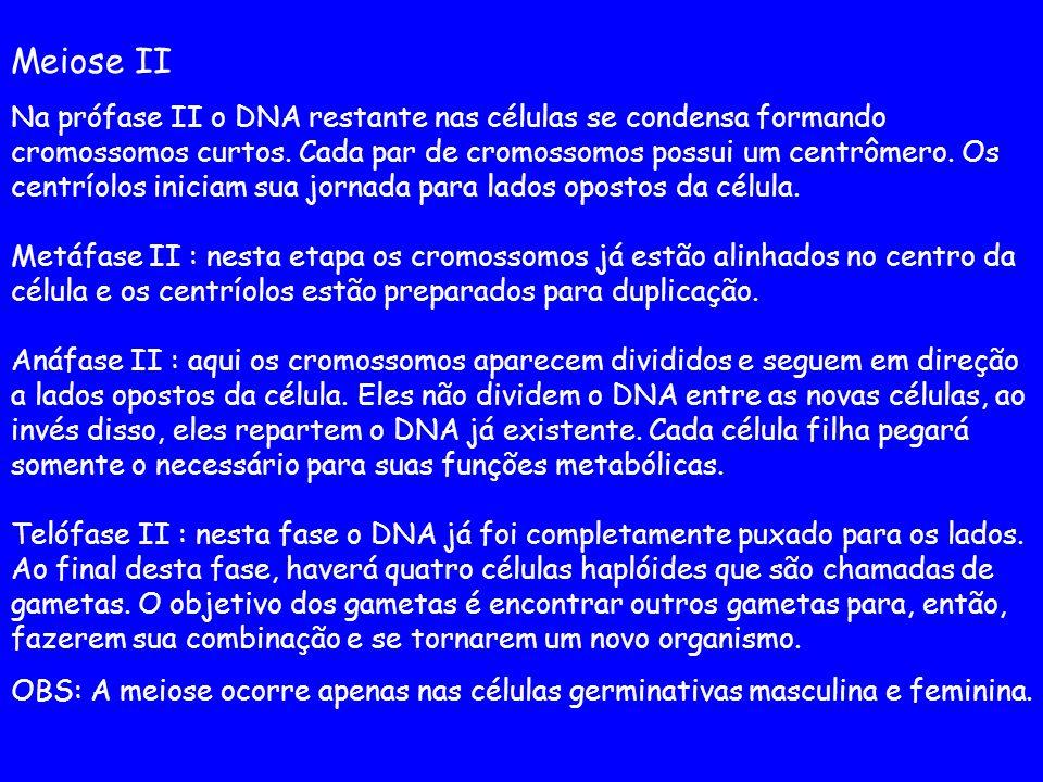 Meiose II Na prófase II o DNA restante nas células se condensa formando cromossomos curtos. Cada par de cromossomos possui um centrômero. Os centríolo