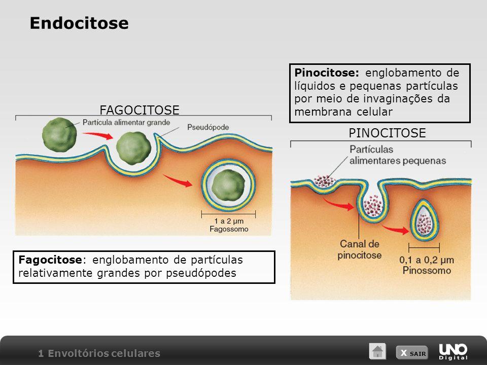 X SAIR Endocitose Pinocitose: englobamento de líquidos e pequenas partículas por meio de invaginações da membrana celular Fagocitose: englobamento de