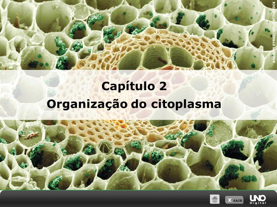 X SAIR Capítulo 2 Organização do citoplasma ANDREW SYRED/SPL/LATINSTOCK