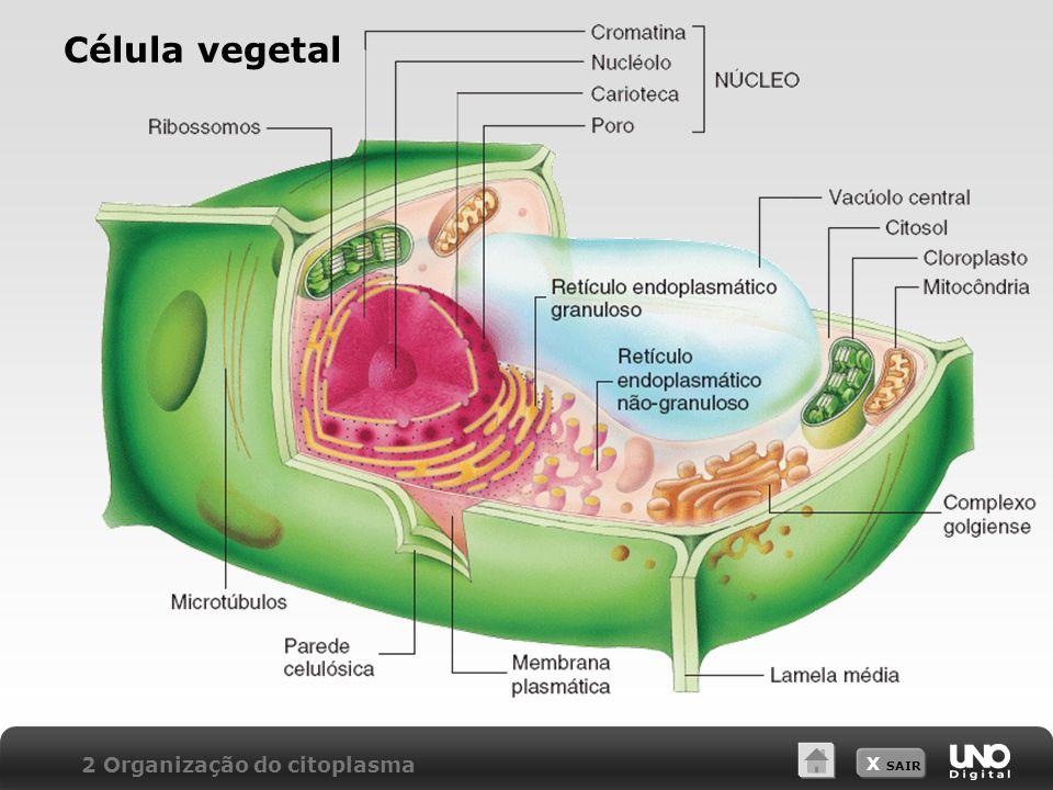 X SAIR Célula vegetal 2 Organização do citoplasma