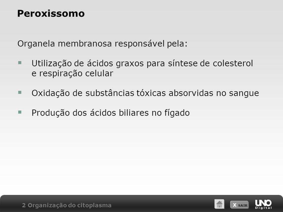 X SAIR Peroxissomo Organela membranosa responsável pela: Utilização de ácidos graxos para síntese de colesterol e respiração celular Oxidação de subst