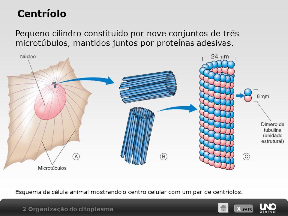 X SAIR Centríolo 2 Organização do citoplasma Pequeno cilindro constituído por nove conjuntos de três microtúbulos, mantidos juntos por proteínas adesi