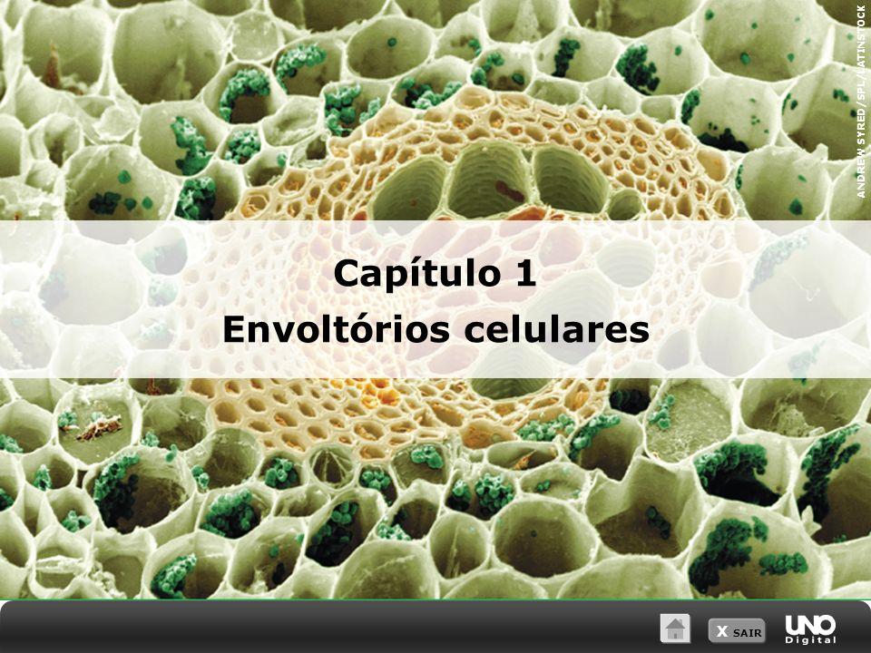 X SAIR 2 As membranas celulares são compostas basicamente por uma dupla camada de fosfolipídeos, na qual estão inseridas proteínas.