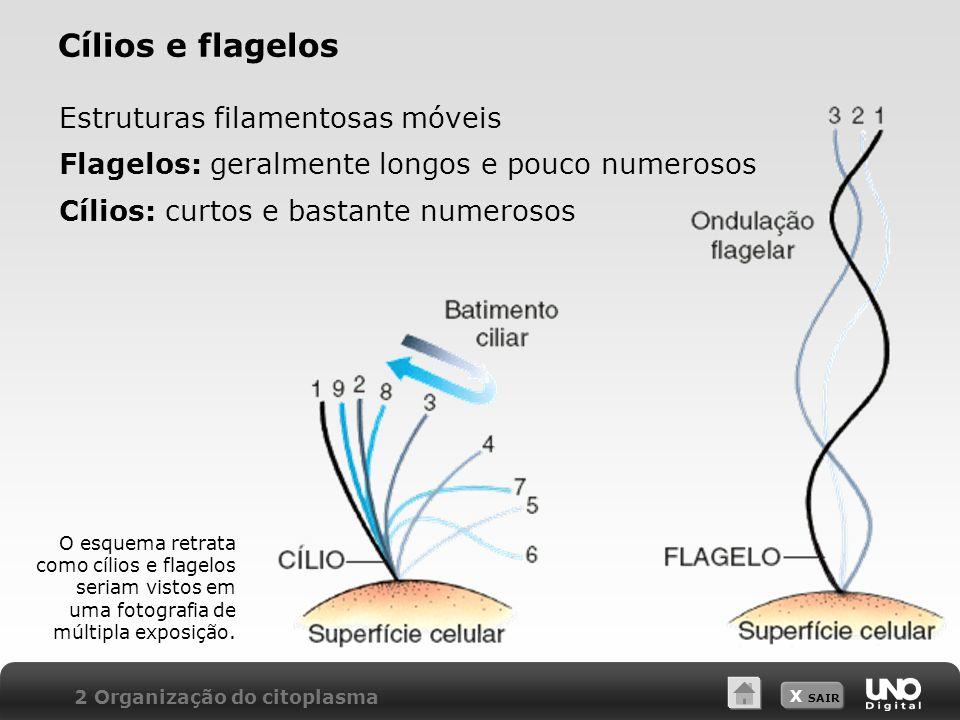 X SAIR Cílios e flagelos 2 Organização do citoplasma Estruturas filamentosas móveis Flagelos: geralmente longos e pouco numerosos Cílios: curtos e bas