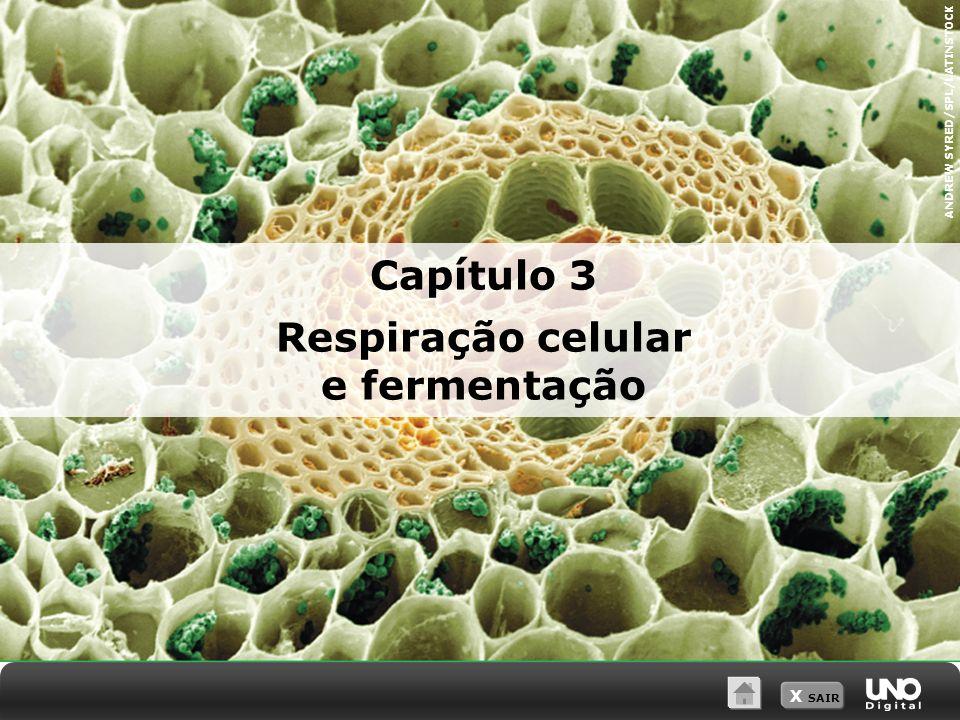 X SAIR Capítulo 3 Respiração celular e fermentação ANDREW SYRED/SPL/LATINSTOCK
