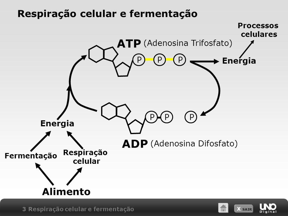 X SAIR Respiração celular e fermentação (Adenosina Trifosfato) Energia PPPPPP (Adenosina Difosfato) Processos celulares Energia Respiração celular Fer