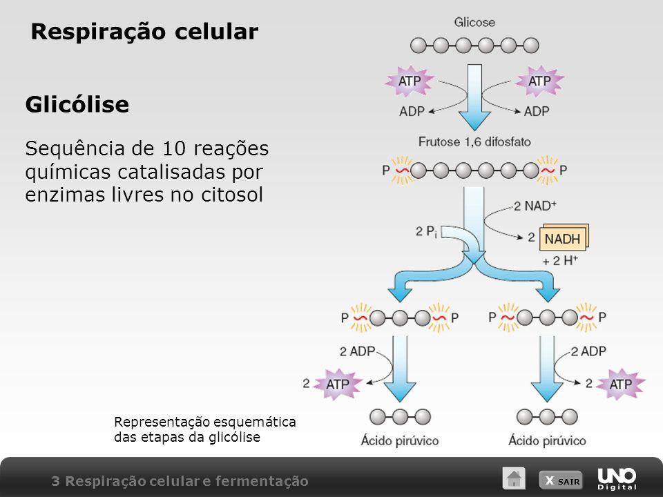X SAIR Respiração celular Glicólise Sequência de 10 reações químicas catalisadas por enzimas livres no citosol 3 Respiração celular e fermentação Repr