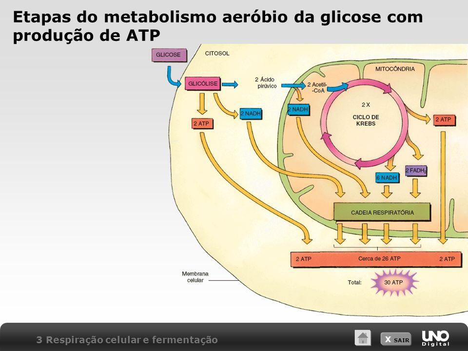 X SAIR Etapas do metabolismo aeróbio da glicose com produção de ATP 3 Respiração celular e fermentação