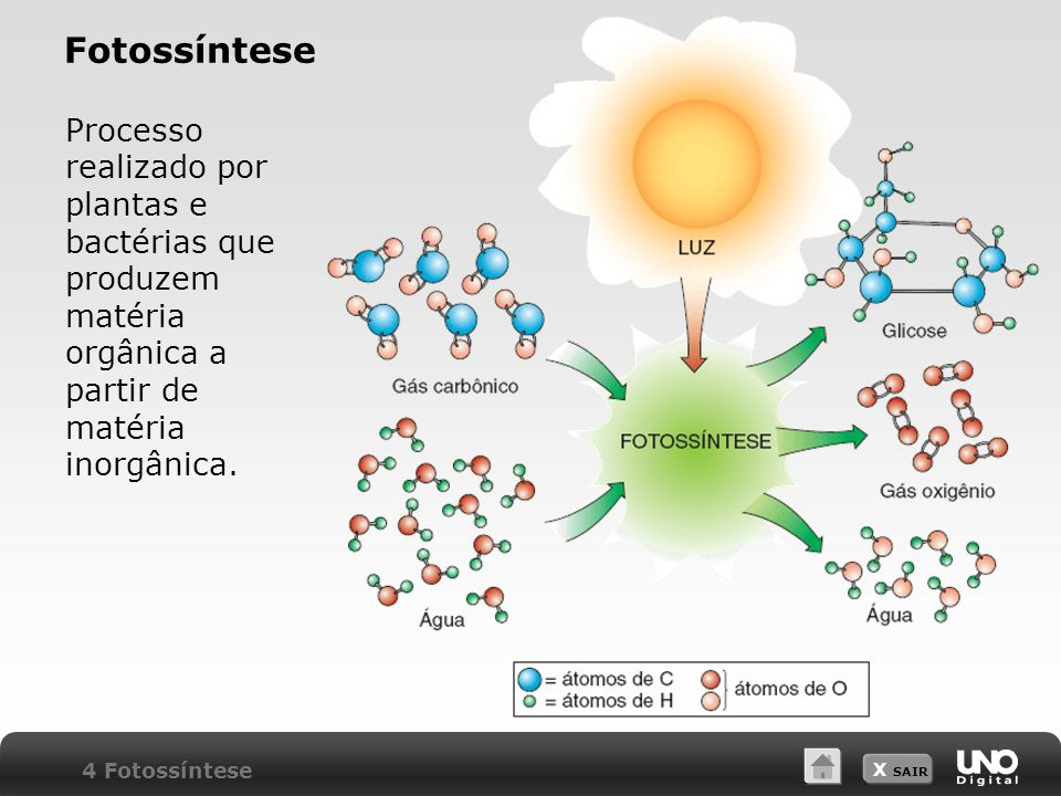 X SAIR Fotossíntese Processo realizado por plantas e bactérias que produzem matéria orgânica a partir de matéria inorgânica. 4 Fotossíntese