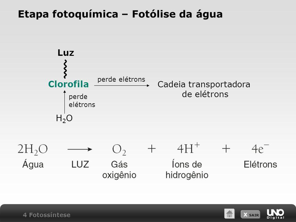 X SAIR Etapa fotoquímica – Fotólise da água Clorofila perde elétrons Cadeia transportadora de elétrons Luz H2OH2O perde elétrons 4 Fotossíntese