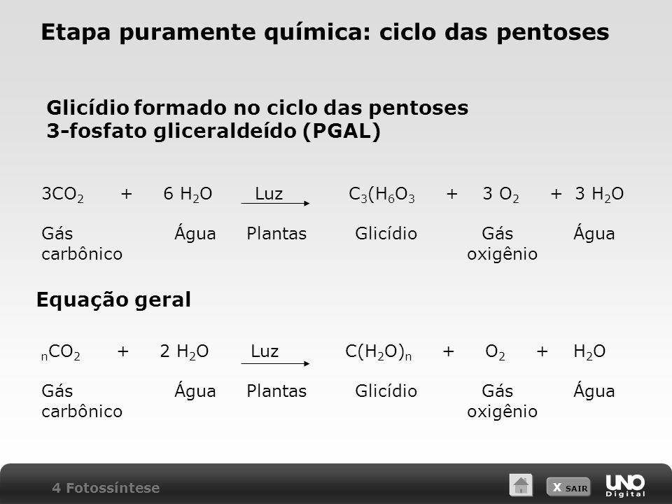 X SAIR Etapa puramente química: ciclo das pentoses Glicídio formado no ciclo das pentoses 3-fosfato gliceraldeído (PGAL) Equação geral 4 Fotossíntese