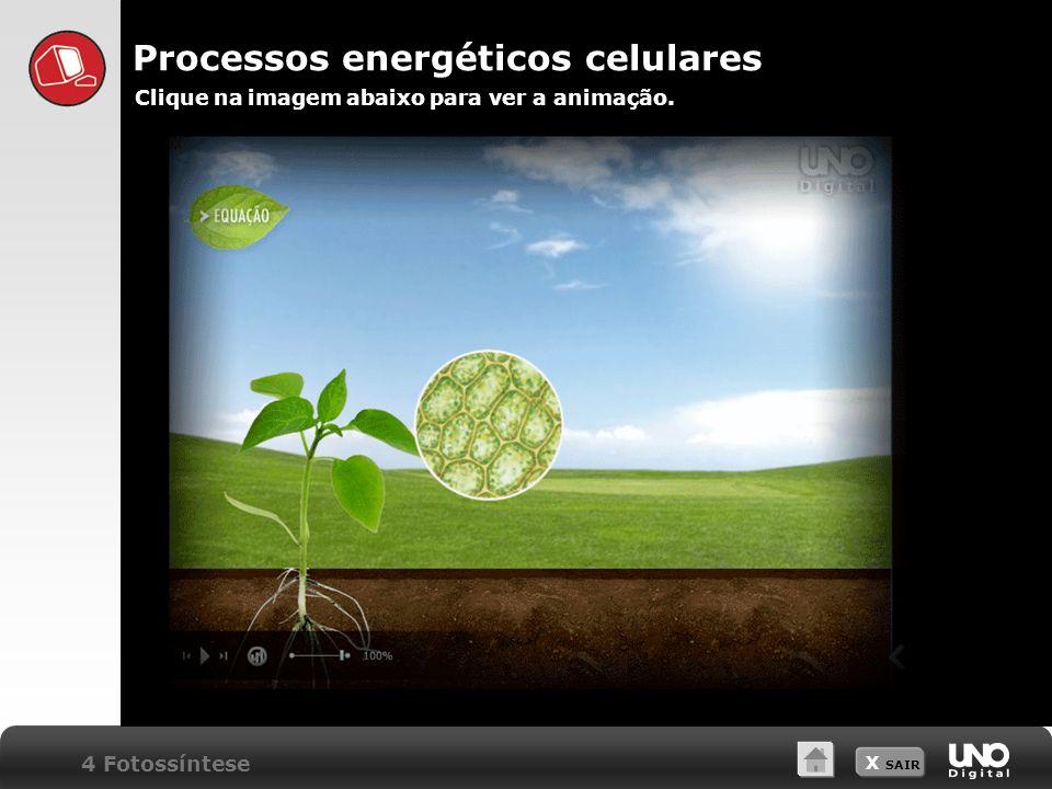 X SAIR Processos energéticos celulares Clique na imagem abaixo para ver a animação. 4 Fotossíntese
