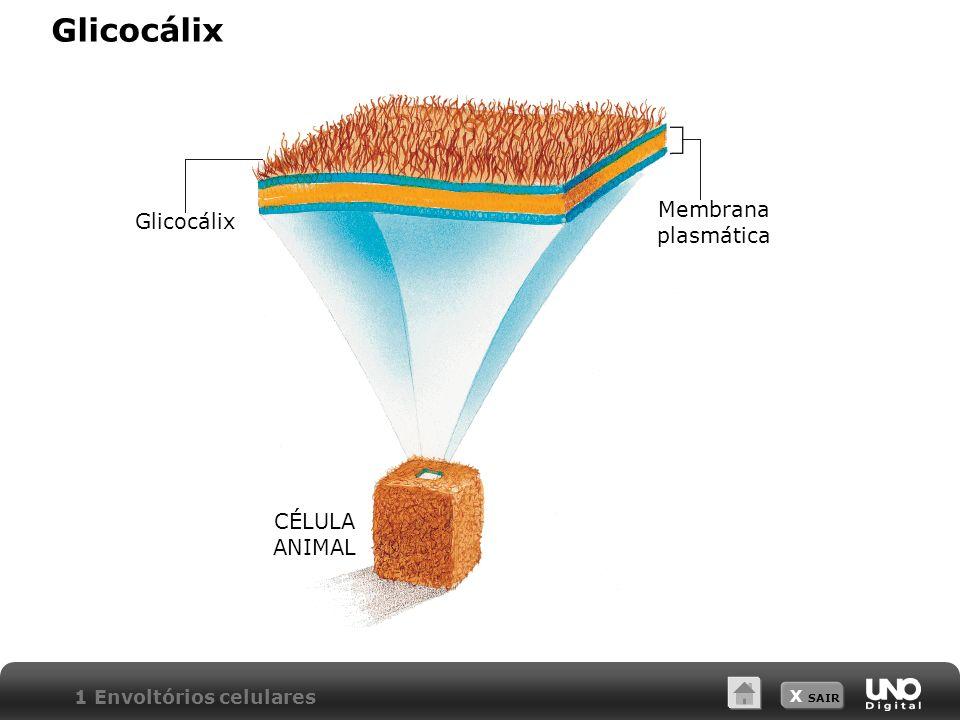 X SAIR Parede celular 1 Envoltórios celulares Esquema da estrutura molecular da parede celulósica Célula vegetal Moléculas de celulose Parede celulósica Moléculas de actina neutra Glicoproteinas Microfibrilas de celulose Moléculas de actina ácida Moléculas de homicelulose