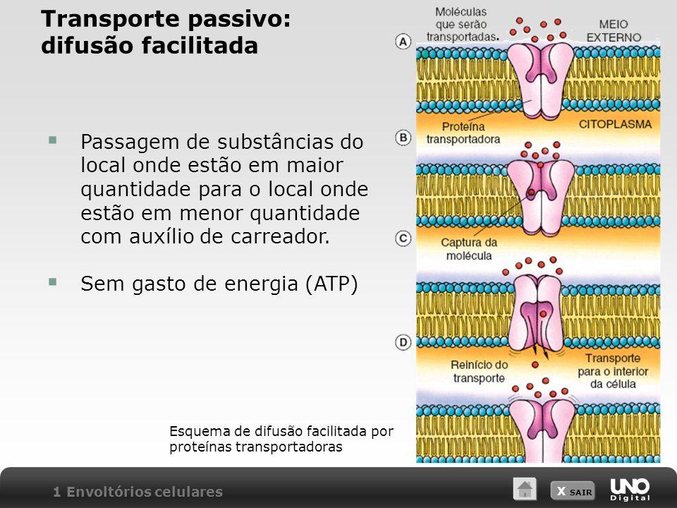 X SAIR Transporte passivo: difusão facilitada Esquema de difusão facilitada por proteínas transportadoras Passagem de substâncias do local onde estão