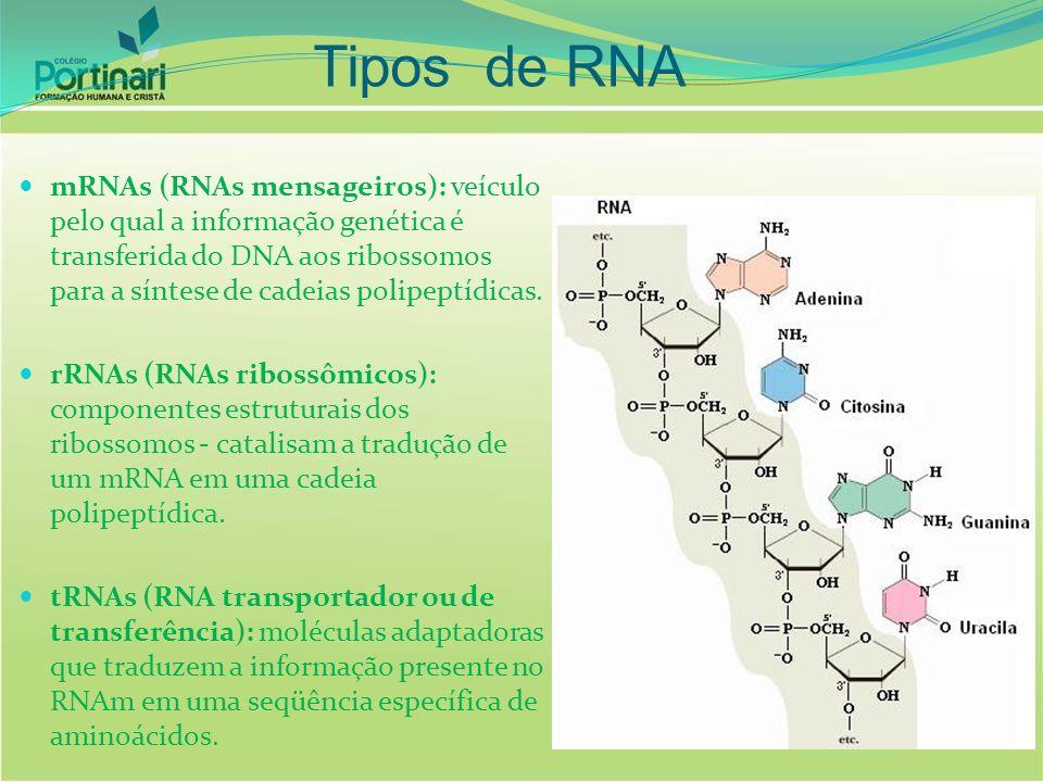 mRNAs (RNAs mensageiros): veículo pelo qual a informação genética é transferida do DNA aos ribossomos para a síntese de cadeias polipeptídicas. rRNAs