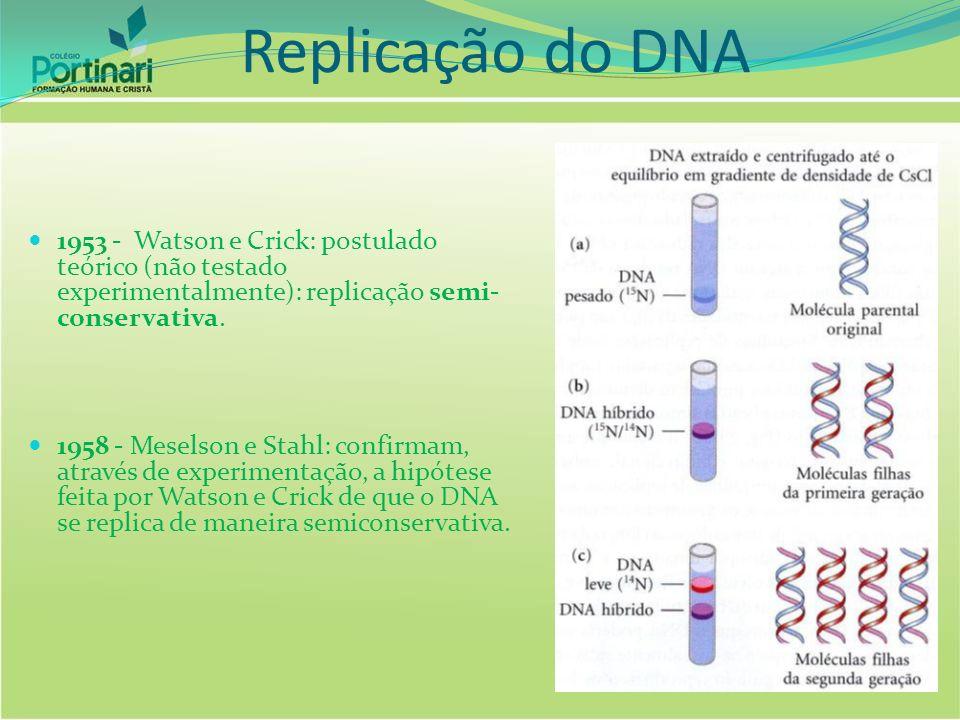 Replicação do DNA 1953 - Watson e Crick: postulado teórico (não testado experimentalmente): replicação semi- conservativa. 1958 - Meselson e Stahl: co