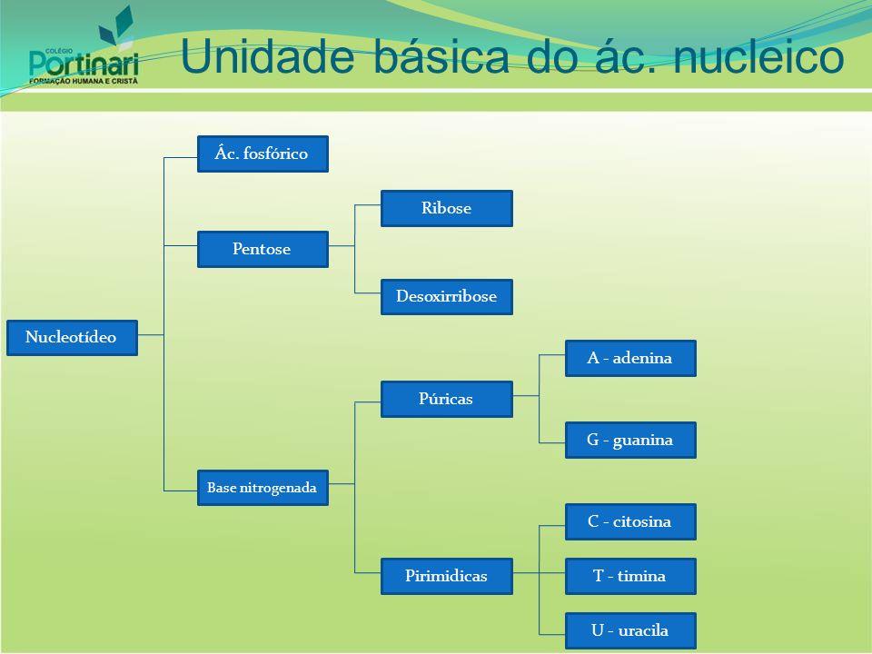 Nucleotídeo Ác. fosfórico Base nitrogenada Pentose Ribose Desoxirribose Púricas Pirimidicas A - adenina G - guanina C - citosina U - uracila T - timin