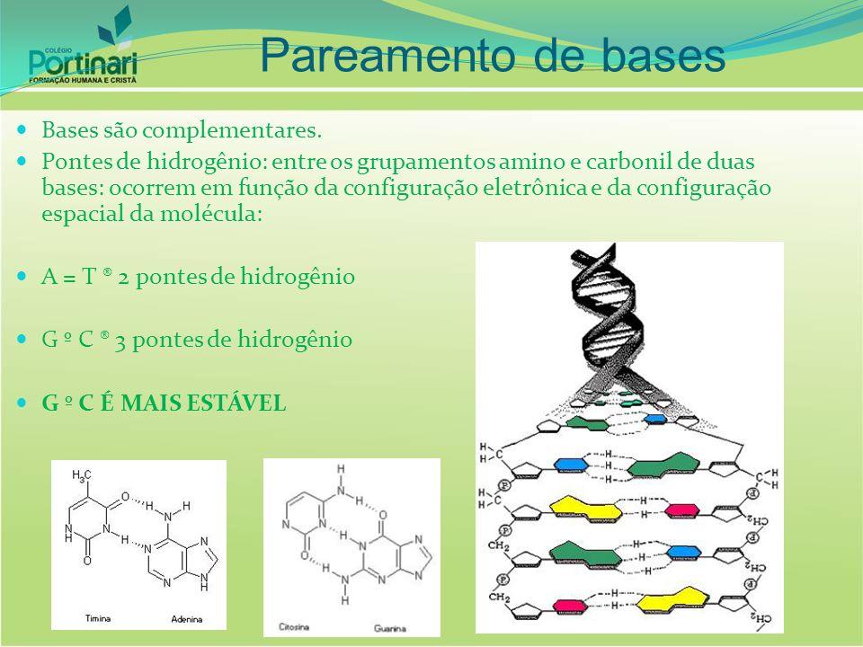 Bases são complementares. Pontes de hidrogênio: entre os grupamentos amino e carbonil de duas bases: ocorrem em função da configuração eletrônica e da