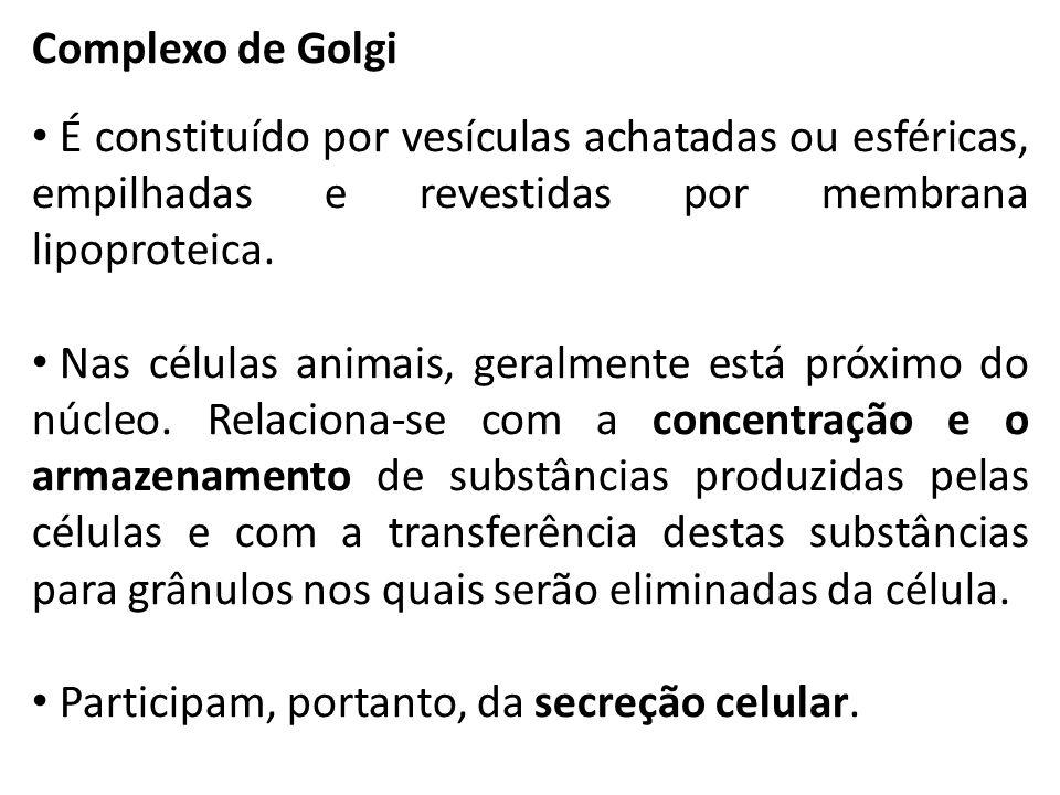 Complexo de Golgi É constituído por vesículas achatadas ou esféricas, empilhadas e revestidas por membrana lipoproteica.