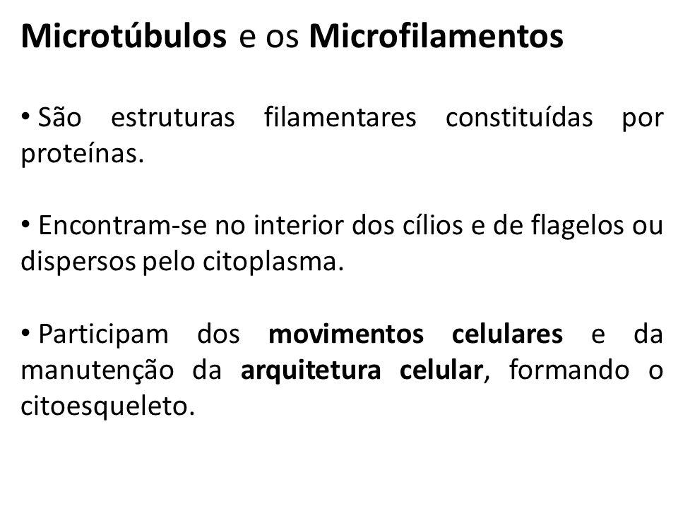Microtúbulos e os Microfilamentos São estruturas filamentares constituídas por proteínas.