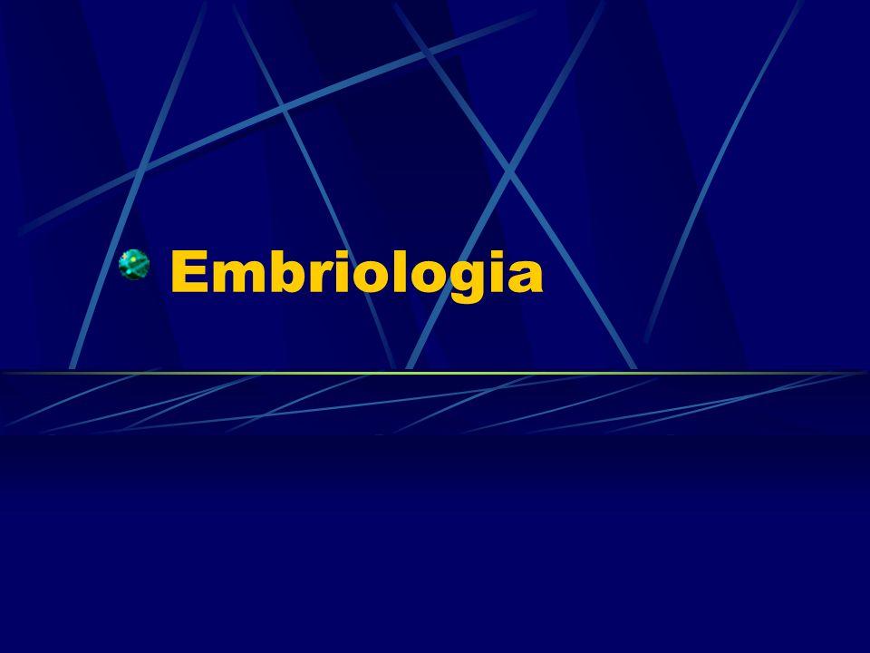 Folhetos embrionários Tecidos EctodermaEpitélio e seus anexos; Sistema Nervoso.