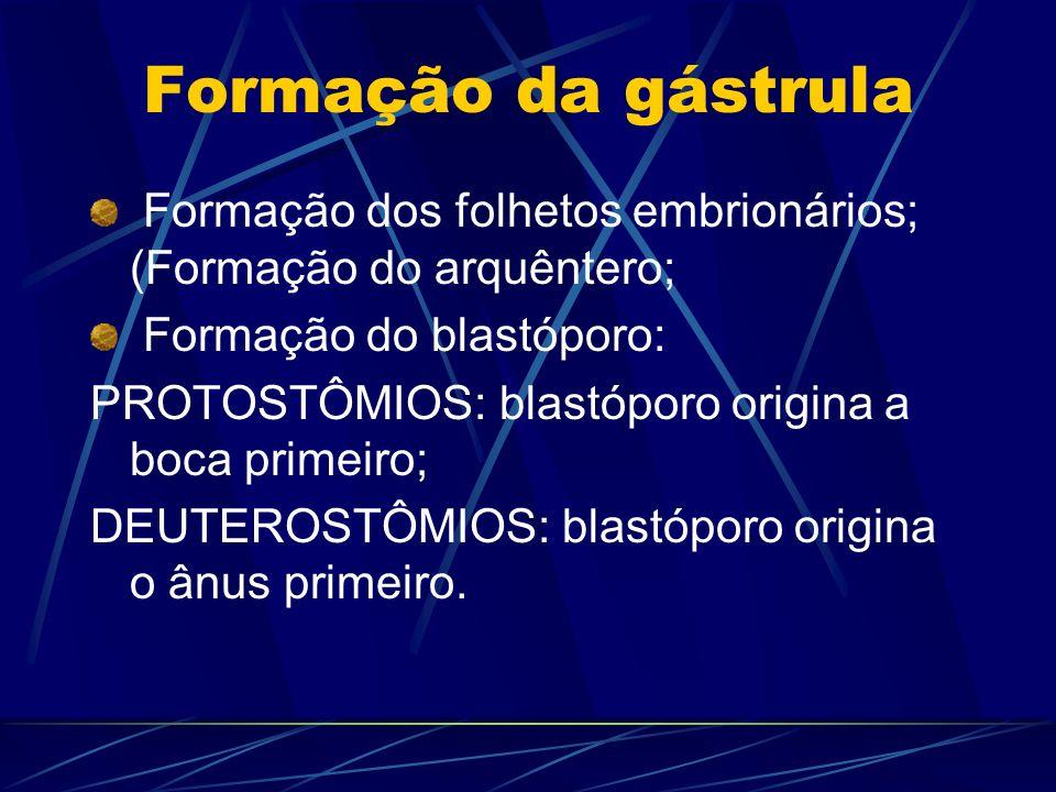 Formação da gástrula Formação dos folhetos embrionários; (Formação do arquêntero; Formação do blastóporo: PROTOSTÔMIOS: blastóporo origina a boca primeiro; DEUTEROSTÔMIOS: blastóporo origina o ânus primeiro.