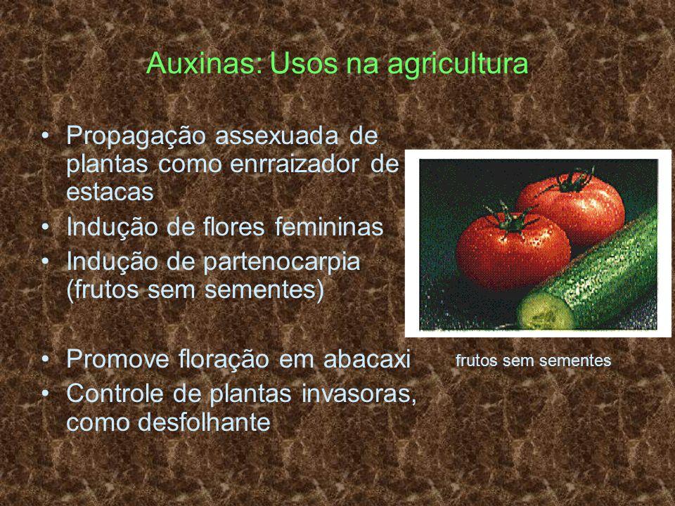 Auxinas: Usos na agricultura Propagação assexuada de plantas como enrraizador de estacas Indução de flores femininas Indução de partenocarpia (frutos