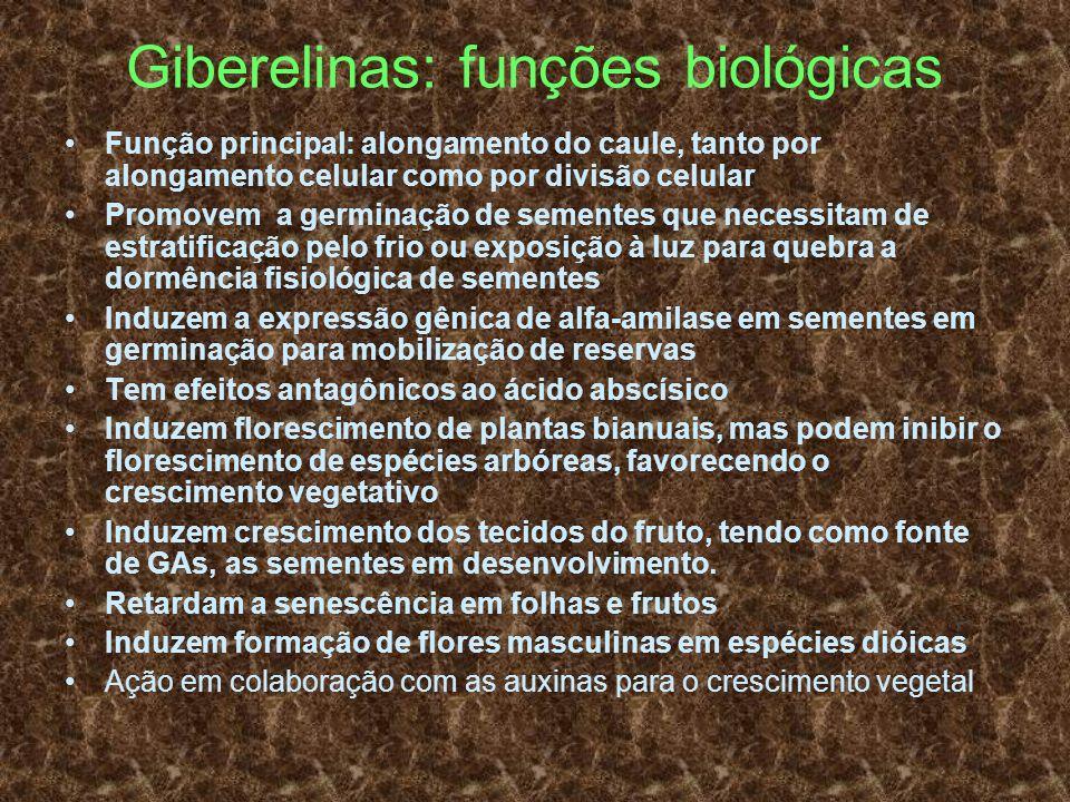 Giberelinas: funções biológicas Função principal: alongamento do caule, tanto por alongamento celular como por divisão celular Promovem a germinação d