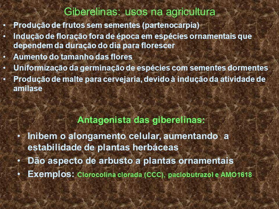 Giberelinas: usos na agricultura Produção de frutos sem sementes (partenocarpia) Indução de floração fora de época em espécies ornamentais que depende