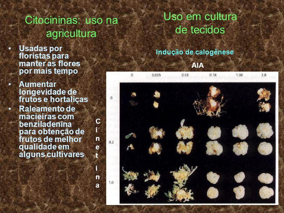Citocininas: uso na agricultura Usadas por floristas para manter as flores por mais tempo Aumentar longevidade de frutos e hortaliças Raleamento de ma