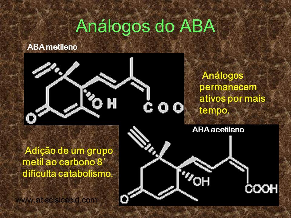 Análogos do ABA ABA metileno ABA acetileno Adição de um grupo metil ao carbono 8´ dificulta catabolismo. www.abscisicacid.com Análogos permanecem ativ