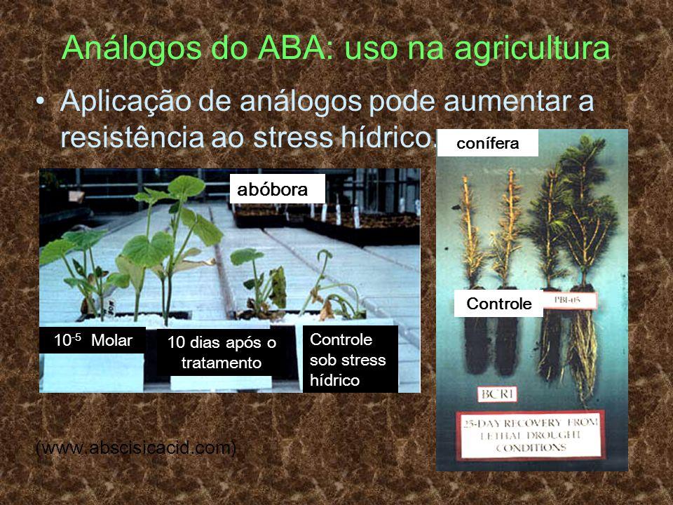 Análogos do ABA: uso na agricultura Aplicação de análogos pode aumentar a resistência ao stress hídrico. (www.abscisicacid.com) abóbora conífera Contr