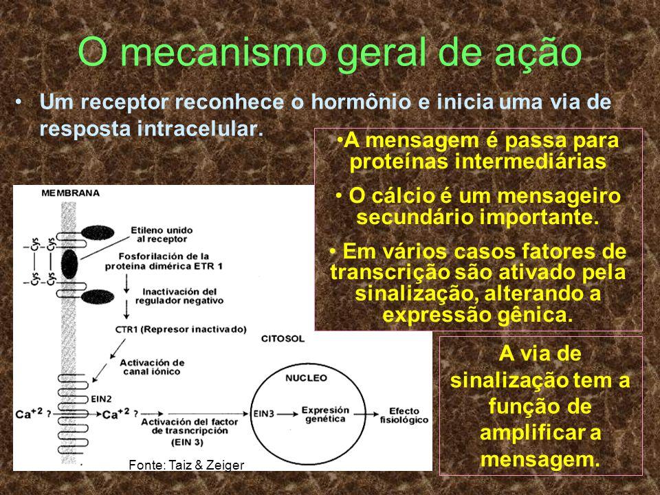 O mecanismo geral de ação Um receptor reconhece o hormônio e inicia uma via de resposta intracelular. A mensagem é passa para proteínas intermediárias