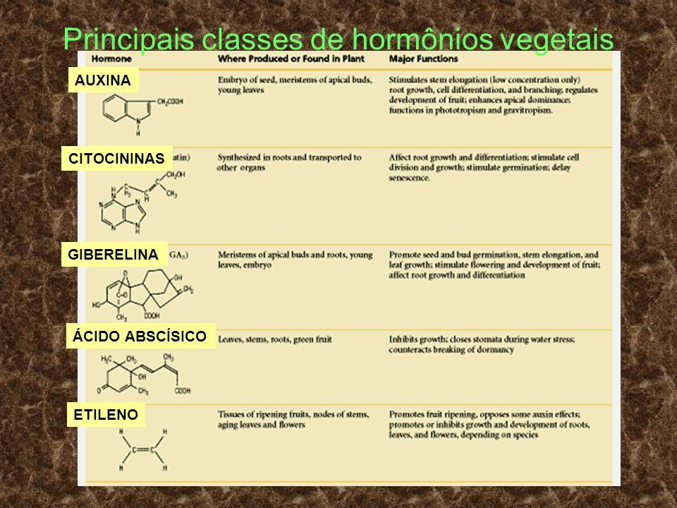 Principais classes de hormônios vegetais AUXINA CITOCININAS GIBERELINA ÁCIDO ABSCÍSICO ETILENO