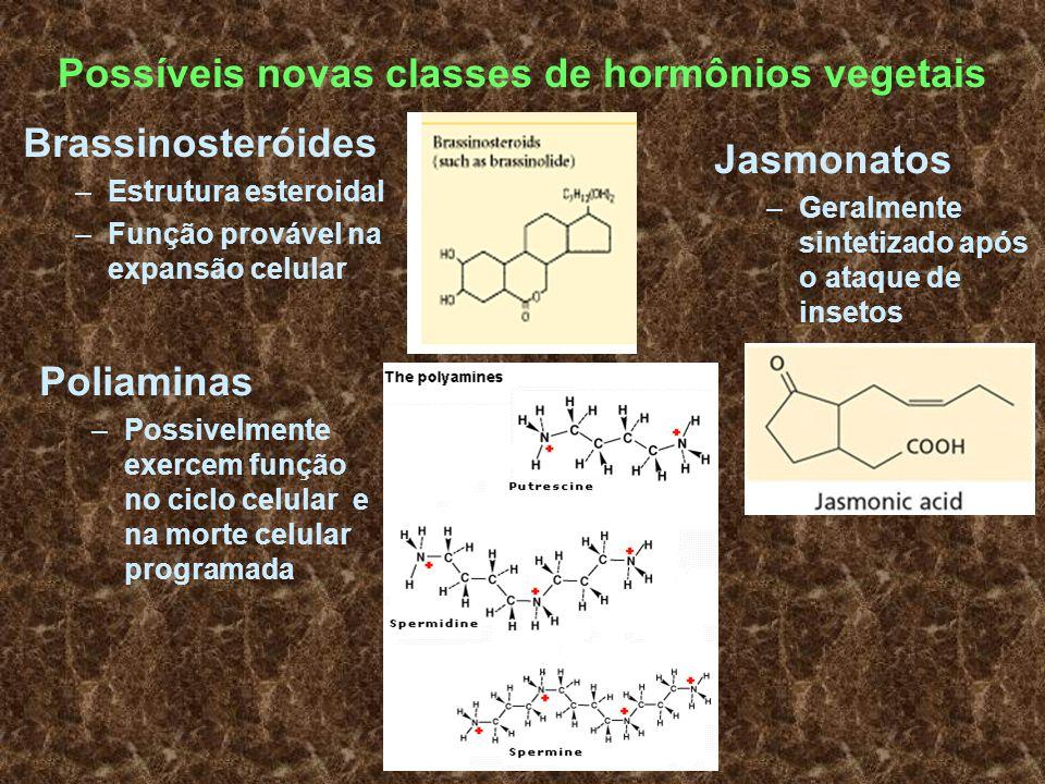 Possíveis novas classes de hormônios vegetais Brassinosteróides –Estrutura esteroidal –Função provável na expansão celular Jasmonatos –Geralmente sint