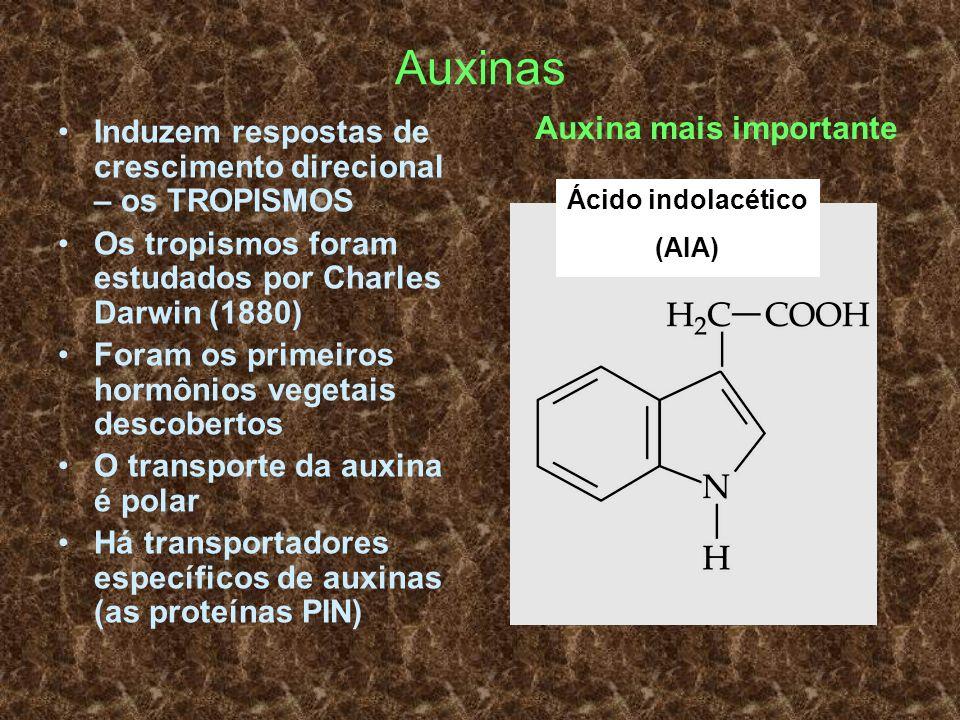 Auxinas Induzem respostas de crescimento direcional – os TROPISMOS Os tropismos foram estudados por Charles Darwin (1880) Foram os primeiros hormônios