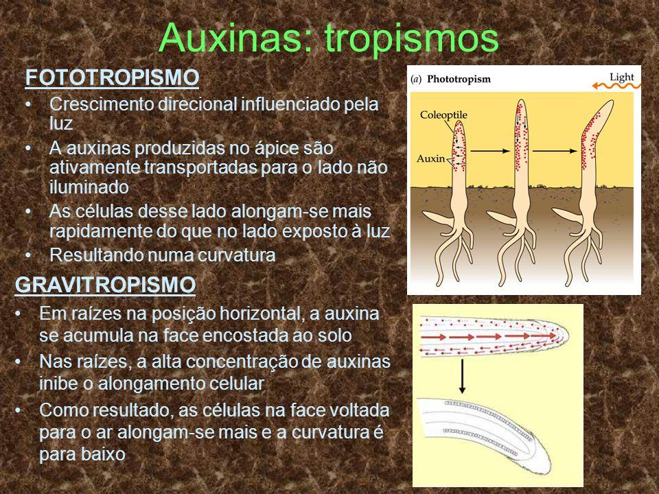 Auxinas: tropismos FOTOTROPISMO Crescimento direcional influenciado pela luz A auxinas produzidas no ápice são ativamente transportadas para o lado nã