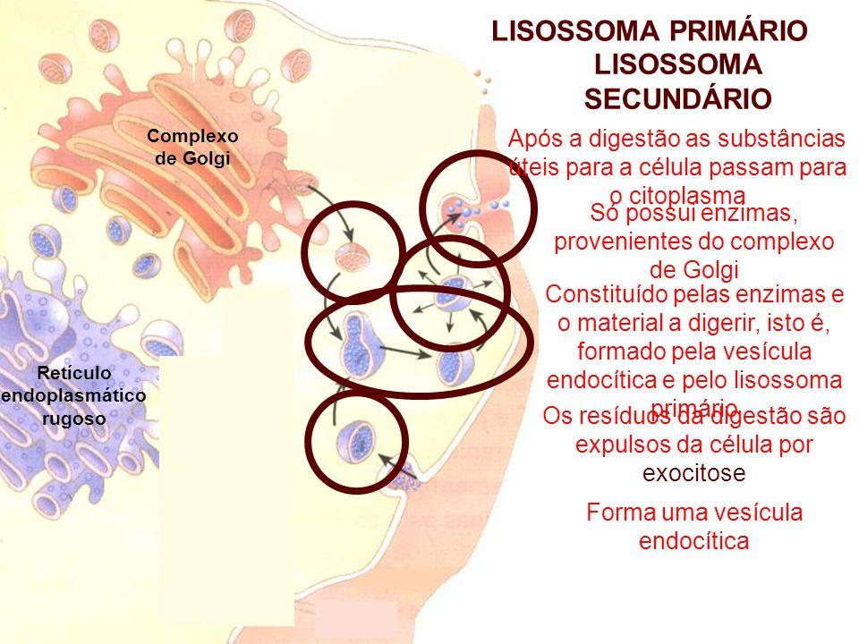Complexo de Golgi Retículo endoplasmático rugoso Digestão celular de substâncias provenientes do exterior da célula (macromoléculas ou microrganismos) HETEROFAGIA