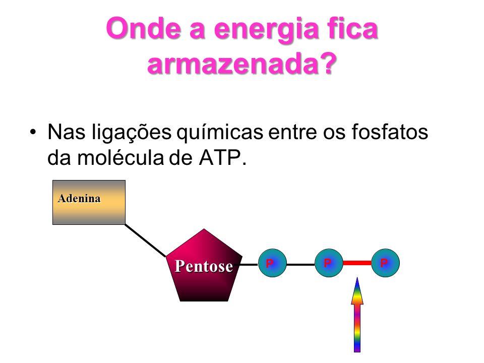 Onde a energia fica armazenada? Nas ligações químicas entre os fosfatos da molécula de ATP. PP Adenina Pentose P