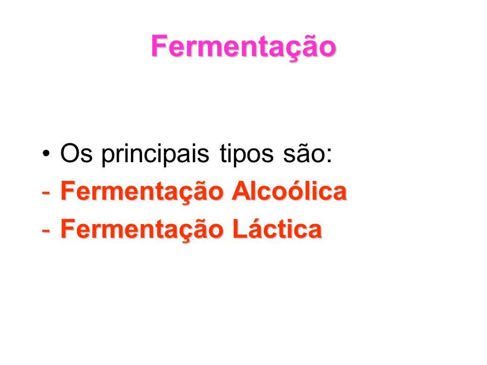 Fermentação Os principais tipos são: -Fermentação Alcoólica -Fermentação Láctica