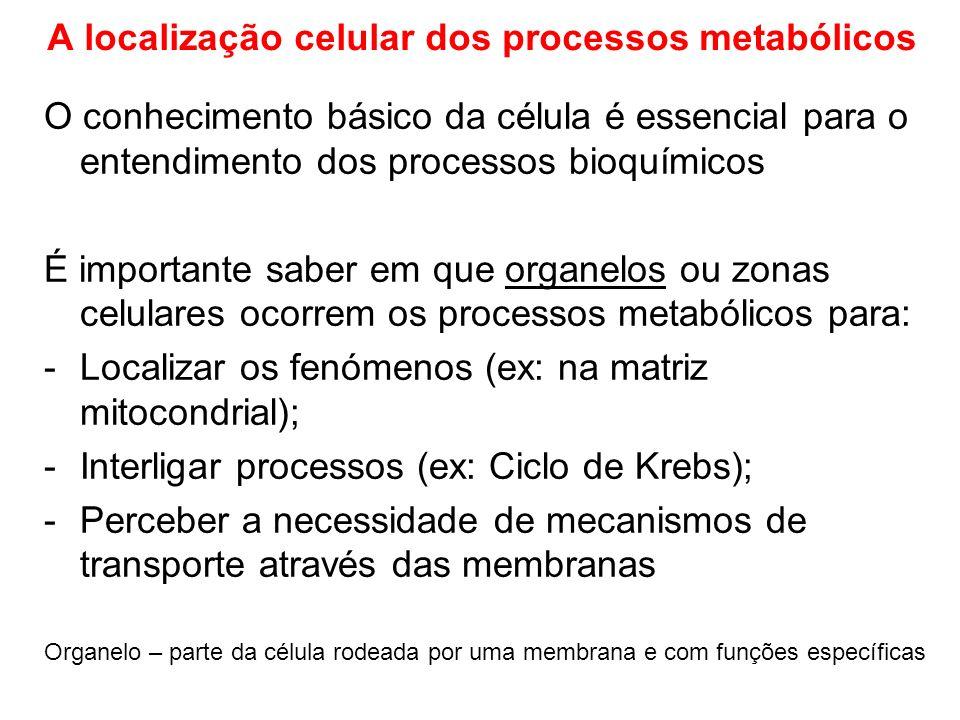 A localização celular dos processos metabólicos O conhecimento básico da célula é essencial para o entendimento dos processos bioquímicos É importante