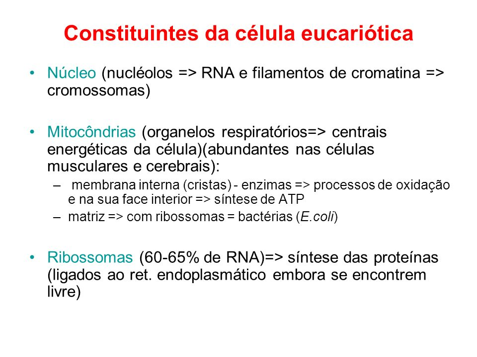 Constituintes da célula eucariótica Núcleo (nucléolos => RNA e filamentos de cromatina => cromossomas) Mitocôndrias (organelos respiratórios=> centrai